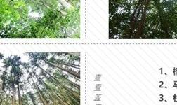 怎样鉴别楠香木生态免漆板?记住几点,你就是专家