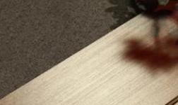為何木地板很貴和實木復合地板