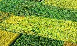 熱訊|林產工業正向智能高端制造邁進
