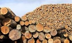2020年1月1日起俄羅斯將禁止出口針葉類商用木材