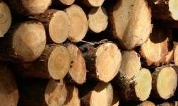 梧州出臺實施礦產木材松香政策