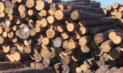 原木点评 上半年市场预期悲观 铁木豆红檀香节后行情未显