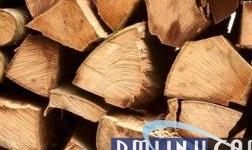 北美市场针叶材木片价格稳定