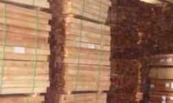熱訊|鄭州新密市林業局復檢木材過關