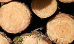 中歐班列國際木材集散中心發布國 家級木材運營數據