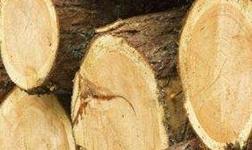 綏芬河中俄木材加工:交易中心一期工程主體完工