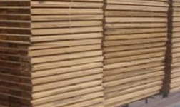 蘭州新區口岸經濟再發力:進口木材加工項目正式投產