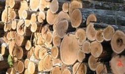 聚焦|上半年原木進口數量全面減少