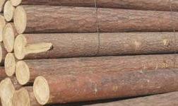 廣西來賓減稅降費 助力木材加工行業