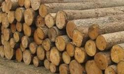中俄木材加工交易中心:步入常态化运营