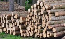2019年主要木材进口国库存颇高