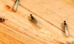"""白蟻怎么消滅?""""蟲蟲拜拜""""帶來高效除蟲新體驗"""
