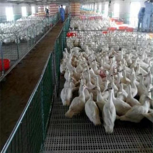 鸡漏粪地板 塑料漏粪地板厂家 鸡鸭鹅用塑料漏粪板