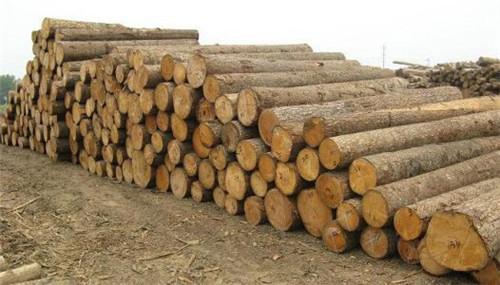 <b>中俄木材加工交易中心:步入常态化运营</b>
