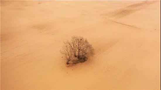 重诺践行!三峰家居规建1400亩公益防沙林!