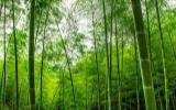定制行业福音-中国板材十大品牌精材艺匠竹香板