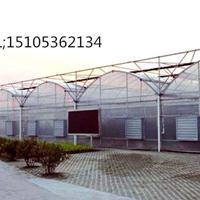 做玻璃温室找青州齐鑫温室园艺造价低质量优