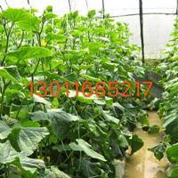 杭州建一个蔬菜的大棚要多少钱
