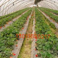 荆州草莓大棚/荆州草莓大棚价格/荆州草莓大棚建设