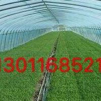 温室工程有限公司/温室工程承建/蔬菜大棚工程