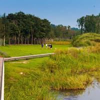 草木景观设计