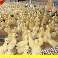 佛山供应养鸡网 养殖网 塑料平网 防雹网