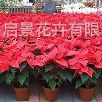 太原酒店,商场,办公室长短期绿植花卉盆景销售租赁租摆