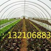 建造3亩地的春暖式蔬菜温室大棚多少钱一平方米
