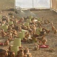 大棚建造厂家 蔬菜温室大棚建造成本 建造冬暖式温室大棚成本