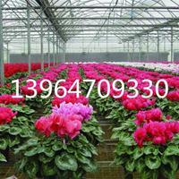 智能温室 智能花卉温室大棚的价格 多肉温室设计安装厂家直销