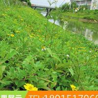 大棕狮生态透水混凝土护坡植生砼增强剂添加剂河道边坡高速路绿化