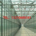 玻璃育苗温室建设/花卉苗木玻璃温室造价/连栋玻璃温室报价表
