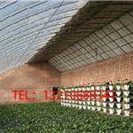 日光温室厂家安装费用/日光温室大棚建设/日光温室运输费用