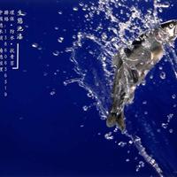 养鲑鳟鱼池漆,台湾南宝