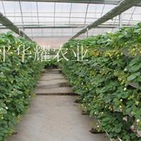 河北草莓立体种植槽,无土栽培槽华耀厂家可按需定制