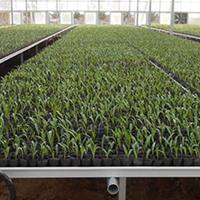 移动苗床-大棚移动苗床网-华耀农业设施