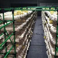 梅州市供应新型蘑菇架 蘑菇架厂家直销
