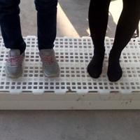 漏粪地板质量有保障 兔用漏粪地板 漏粪地板价格