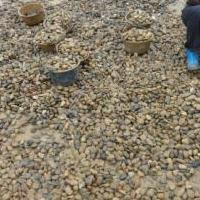 咸阳鹅卵石 /咸阳变压器电厂滤油池水处理鹅卵石生产厂家