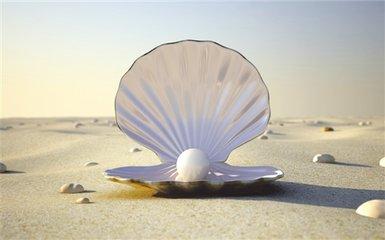 都说贝壳粉有多好  贝壳粉装修的坏处有没有