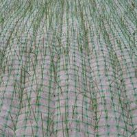泰安四方建材大量现货供应椰丝毯,色植被垫,规格齐全