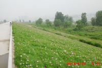 西安种植营养土西安绿化管理养护西安病虫防治服务