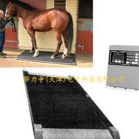 EquiGym-2马用体重秤/移动动物秤 美国