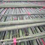 供应7米8米9米长竹竿 桂竹