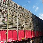 大量批发2米粗竹竿 树木支撑杆绿化支撑杆