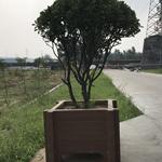 供应西安仿木水泥花箱园林花箱