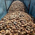 鹅卵石滤料出厂价格  抚州水处理鹅卵石出厂价格