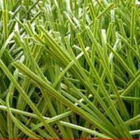 广州厂家批发足球场人造草坪5公分环保PE材质塑料假草