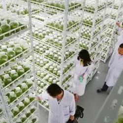 组培架 组培架厂家 组培架定做  组培架价格 植物组培架