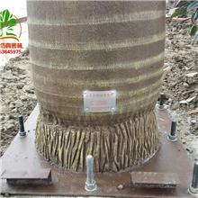 江苏假椰子树假树假棕榈树品牌厂家天骄园林加工厂